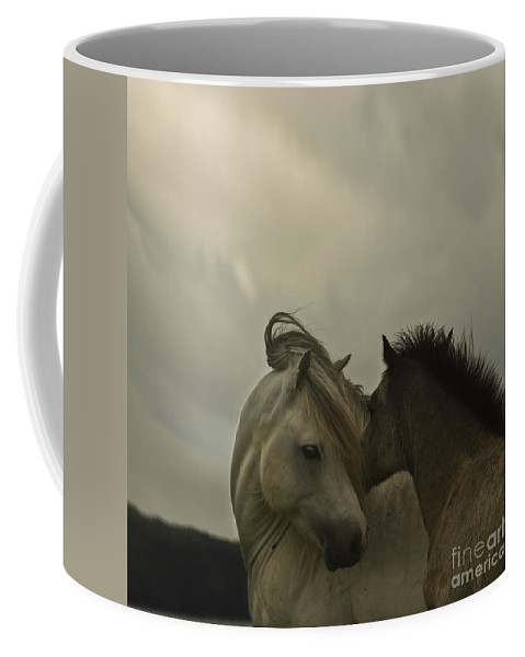Horses Coffee Mug featuring the photograph Cuddle Me by Angel Tarantella