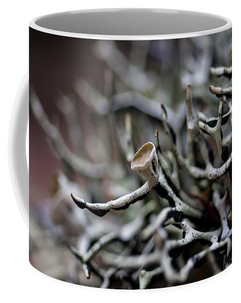 Cup Lichen Coffee Mug featuring the photograph Cup Lichen by Betty Depee