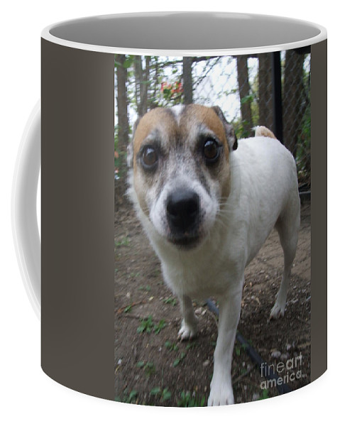 Dog Coffee Mug featuring the photograph Curious Jack by Minding My Visions by Adri and Ray