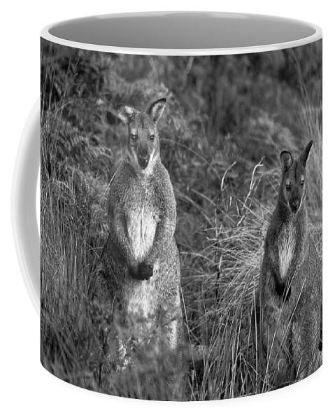 Curious Wallabies Coffee Mug featuring the photograph Curious Wallabies by Sean Davey