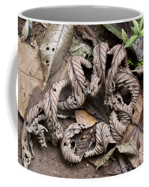Curled Coffee Mug featuring the photograph Curled Leaves by Jean Macaluso