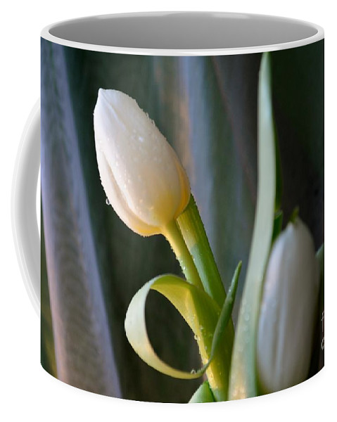 Tulip Coffee Mug featuring the photograph Curly And White by Felicia Tica