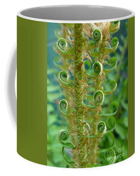 Fern Coffee Mug featuring the photograph Curly Fern by Rain Shine