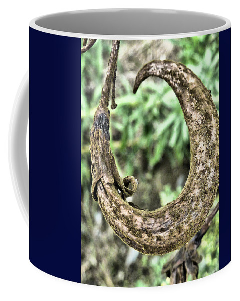 Seed; Pod; Curly; Dried; Withered; Aged; Brown; Green; Autumnal Coffee Mug featuring the photograph Curly by Steve Taylor