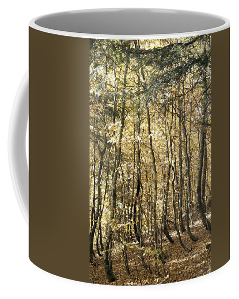 Forest Coffee Mug featuring the photograph Curved Trunks by Patrick Kessler