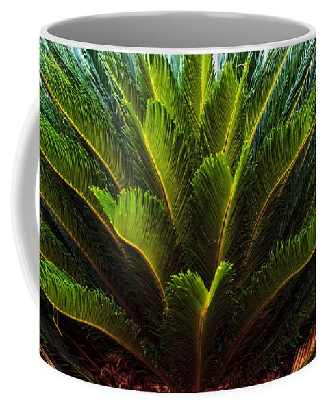 Cycad Sago Palm Coffee Mug featuring the photograph Cycad Sago Palm by Sennie Pierson