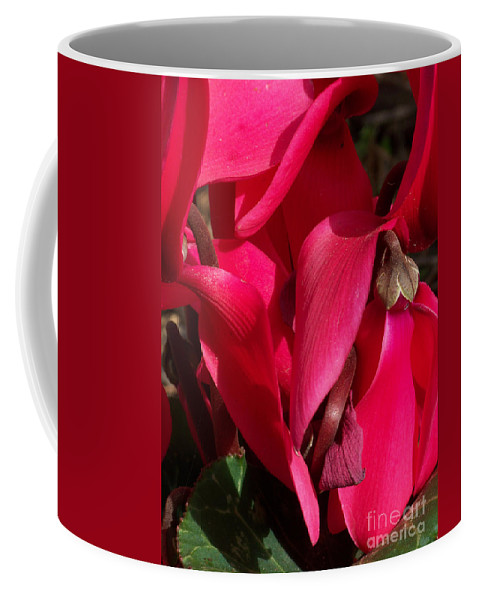Flowers Coffee Mug featuring the photograph Cyclamen by Kathy McClure