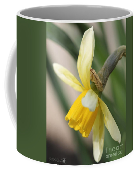 Mccombie Coffee Mug featuring the photograph Cyclamineus Daffodil Named Jack Snipe by J McCombie