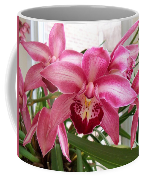 Orchid Coffee Mug featuring the photograph Cymbidium Orchid by Kathryn Meyer