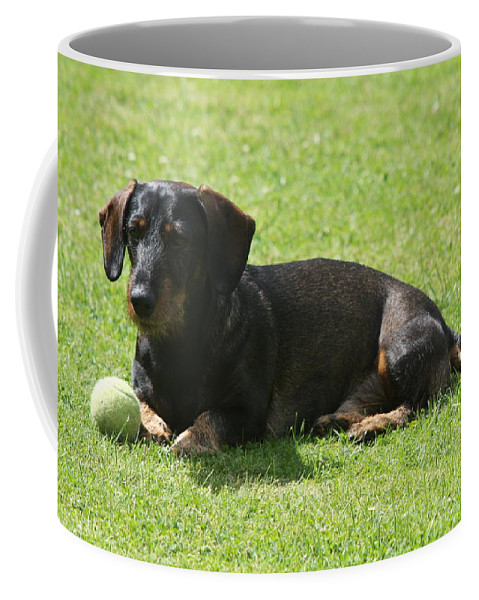 Dog Coffee Mug featuring the photograph Dachshund Wants To Play by Christiane Schulze Art And Photography