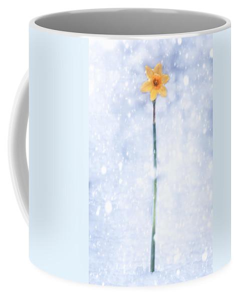 Daffodil Coffee Mug featuring the photograph Daffodil In Snow by Joana Kruse