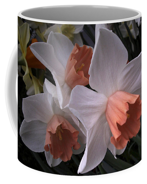 Flower Coffee Mug featuring the photograph Daffodils With Coral Center by Nancy Griswold