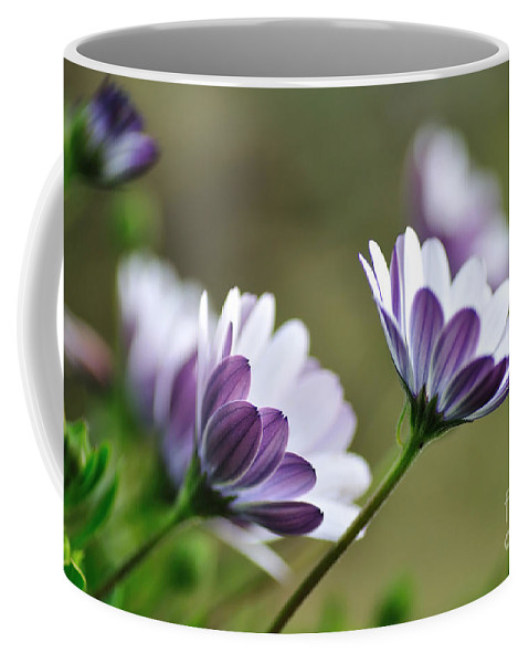 Photography Coffee Mug featuring the photograph Daisies Seeking The Sunlight by Kaye Menner