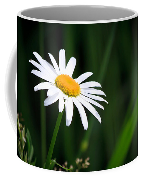 Flower Coffee Mug featuring the photograph Daisy - Bellis Perennis by Bob Orsillo