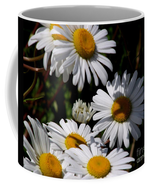 Daisies Coffee Mug featuring the photograph Daisy Days by CapeScapes Fine Art Photography