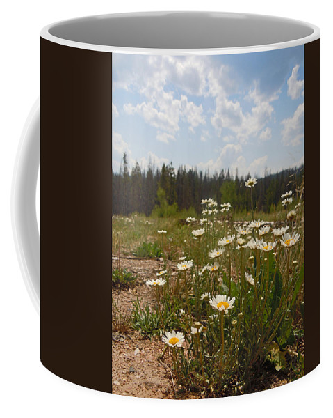 Daisy Coffee Mug featuring the photograph Daisy Patch by Heather Coen