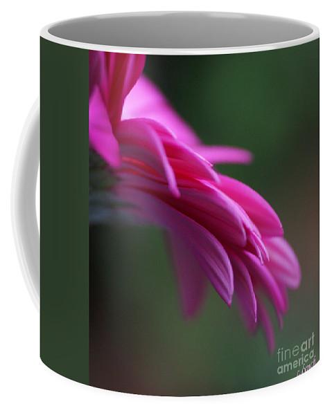 Pink Coffee Mug featuring the photograph Daisy Petals by Carol Lynch