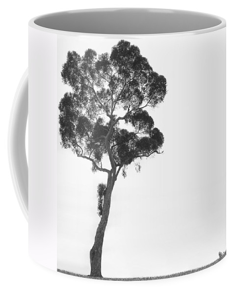 Bird And Cat Coffee Mug featuring the photograph Damn Missed Again by Mike McGlothlen