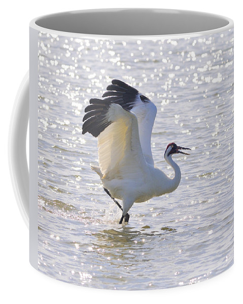 Whooping Crane Coffee Mug featuring the photograph Dancing For My Lady by Tony Beck