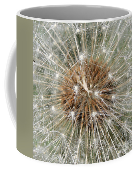 Dandelion Coffee Mug featuring the photograph Dandelion Square by Carol Groenen