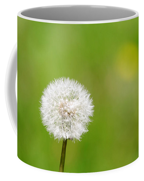 Plant Coffee Mug featuring the photograph Dandelion by Steve Ball