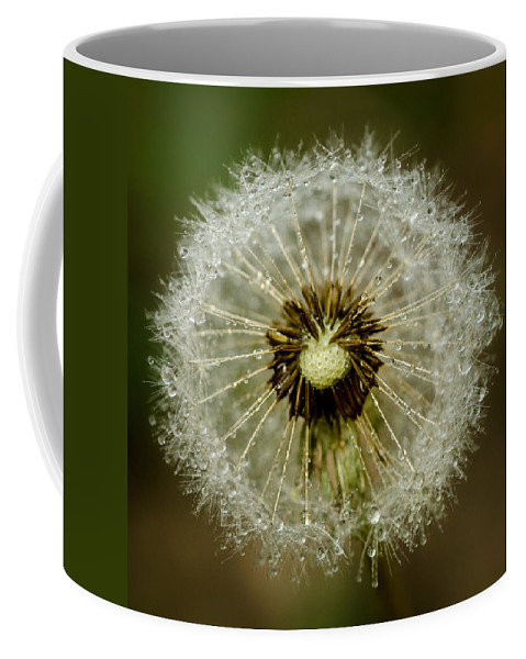 Background Coffee Mug featuring the photograph Dandelion by TouTouke A Y