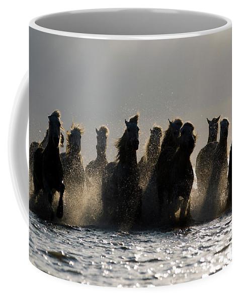 Horses Coffee Mug featuring the photograph Dark Horses by Carol Walker