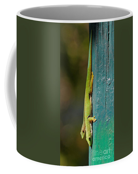 Madagascar Coffee Mug featuring the photograph day geckos from Madagascar 1 by Rudi Prott