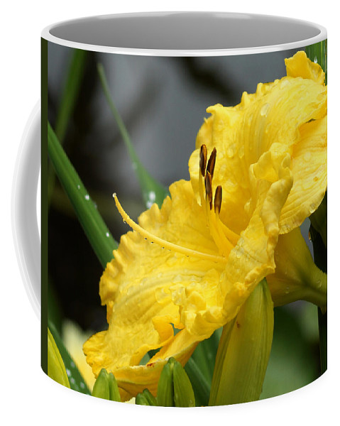 Daylilies Abound Coffee Mug featuring the photograph Daylilies Abound by Kim Pate