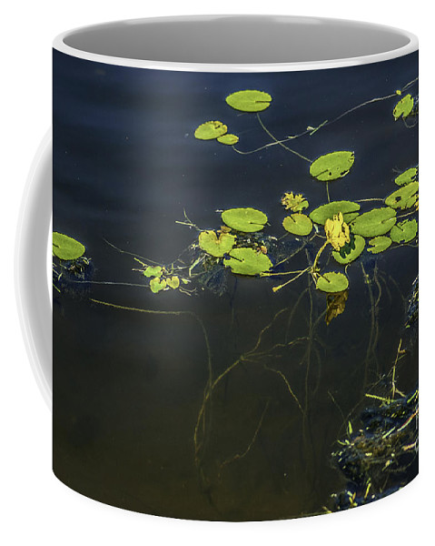 Lilly Pad Coffee Mug featuring the photograph Deep Roots by Dale Powell