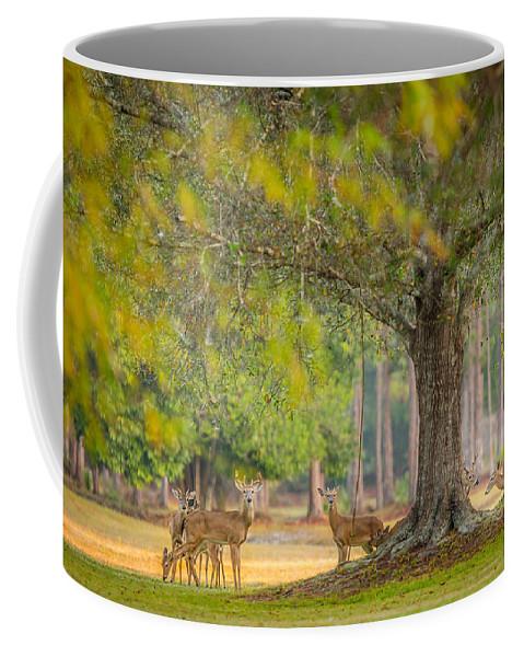 Deer Coffee Mug featuring the photograph Deer Crossing by Dennis Goodman