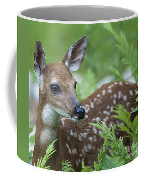 Deer Coffee Mug featuring the photograph Flora And Fawna by Emma England