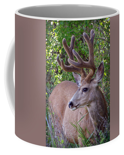 Deer Coffee Mug featuring the photograph Buck In The Woods by Athena Mckinzie