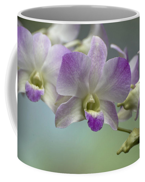 Orchid Coffee Mug featuring the photograph Dendrobium 6398 by Terri Winkler