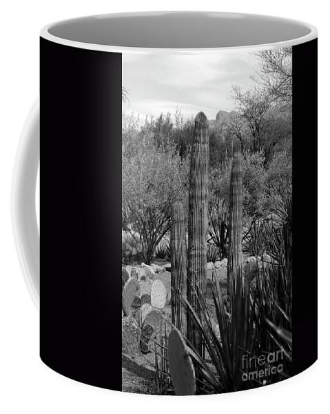 Desert Coffee Mug featuring the photograph Desert Cactus by Kathleen Struckle