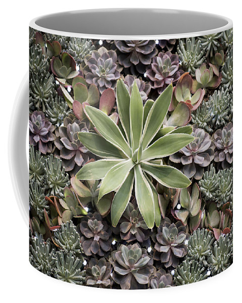 Plant Decoration Coffee Mug featuring the photograph Desert Flora by Terri Winkler