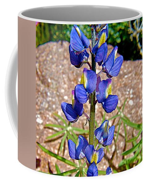Desert Lupine In Arizona Coffee Mug featuring the photograph Desert Lupine-arizona  by Ruth Hager