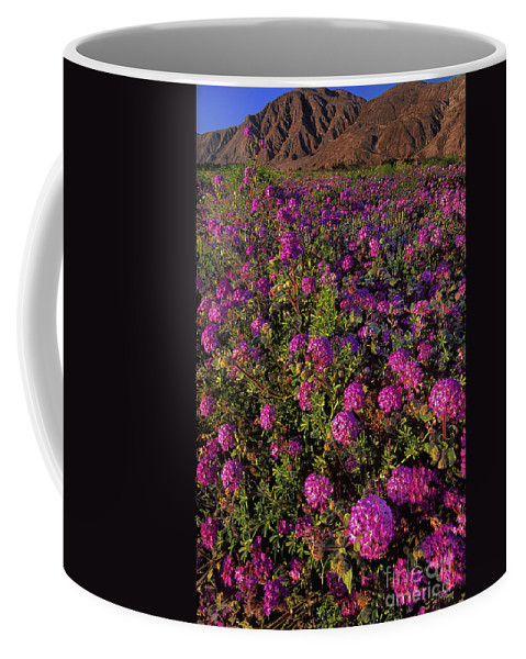Desert Sand Verbena Coffee Mug featuring the photograph Desert Sand Verbena Wildflowers by Dave Welling