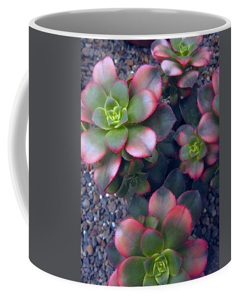 hens And Chicks Coffee Mug featuring the photograph Desert Succulents by Daniel Hagerman