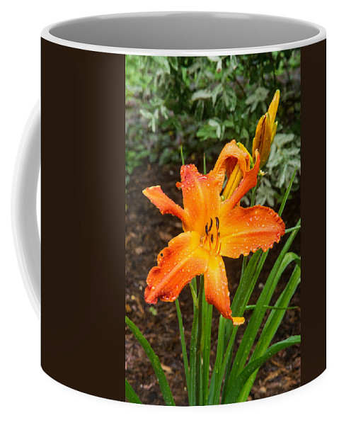 Lily Coffee Mug featuring the photograph Dew Drops On Golden Lily by Douglas Barnett