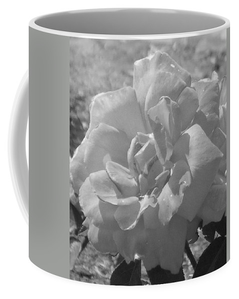 Rose Coffee Mug featuring the photograph Dew Rose by Pharris Art