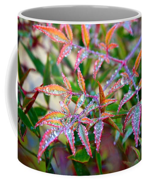 Dew Coffee Mug featuring the photograph Dewdrops by Kathryn Meyer