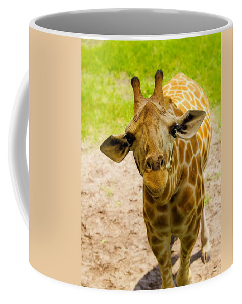 Giraffe Coffee Mug featuring the photograph Different Perspective by Laura Ragland