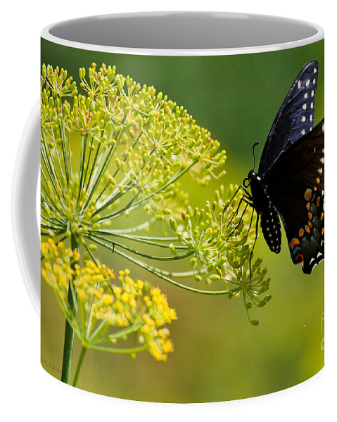 Butterfly Coffee Mug featuring the photograph Dill And The Butterfly by Jan Killian