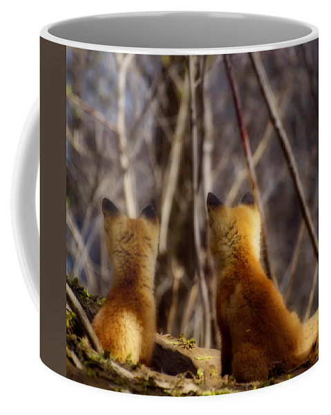 Kit Fox Coffee Mug featuring the photograph Distracted by Thomas Young