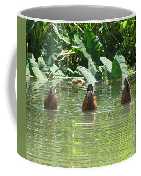 Ducks Coffee Mug featuring the photograph Dive by Beth Vincent