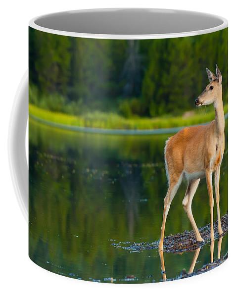 Animal Coffee Mug featuring the photograph Doe by Sebastian Musial