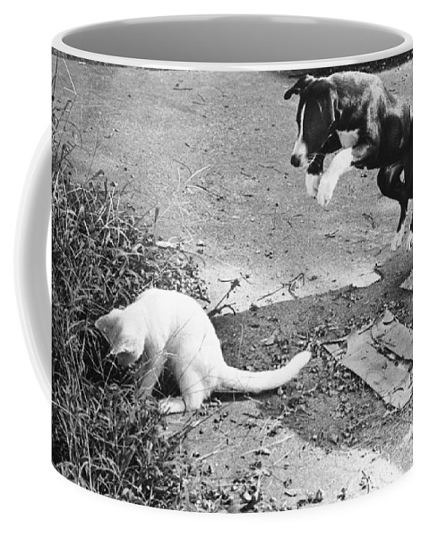 Animal Coffee Mug featuring the photograph Dog Jumping On An Unsuspecting Kitten by Lynn Lennon