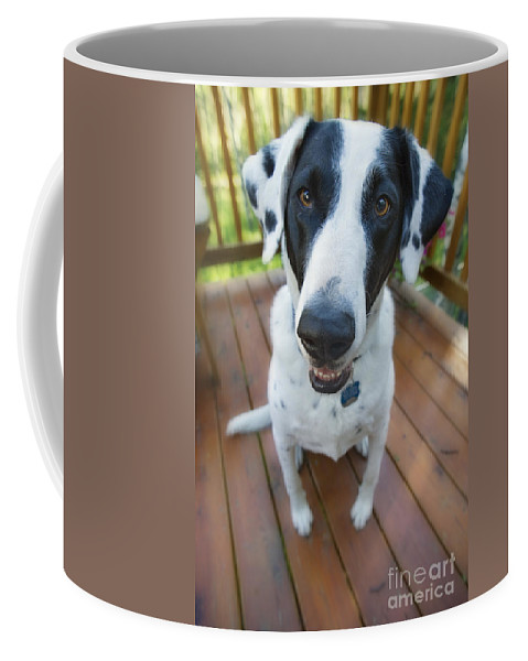 Animal Coffee Mug featuring the photograph Dog On A Wooden Deck by Wave Royalty Free