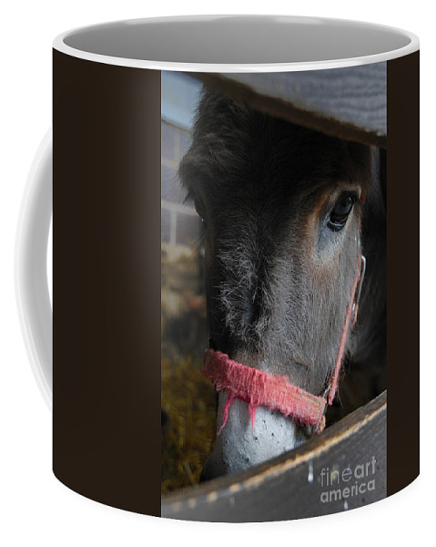 Animal Eyes Coffee Mug featuring the photograph Donkey Behind Fence by Amy Cicconi